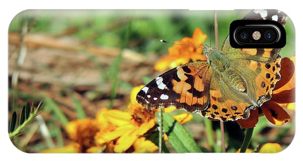 Painted Lady On Zinnia IPhone Case