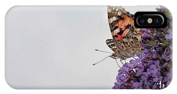 Scenic iPhone Case - Painted Lady (vanessa Cardui) by John Edwards