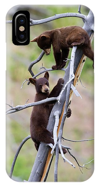 Pair Of Bear Cubs In A Tree IPhone Case