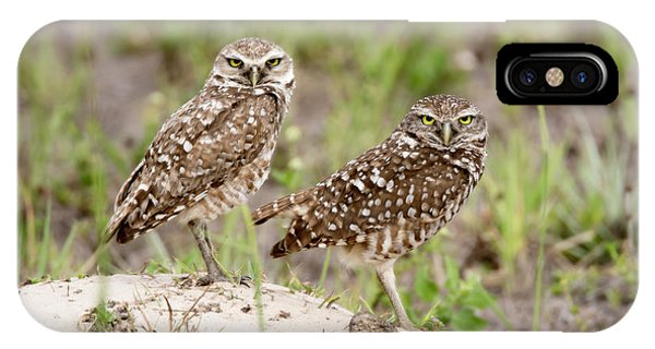 Pair Of Burrowing Owls IPhone Case