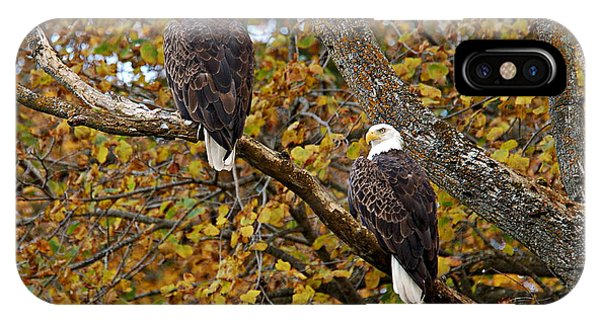Pair Of Eagles In Autumn IPhone Case