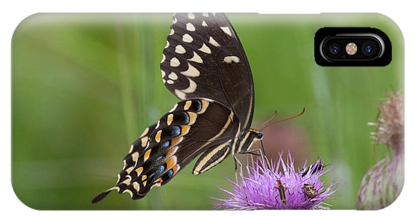 Palamedes Swallowtail And Friends IPhone Case