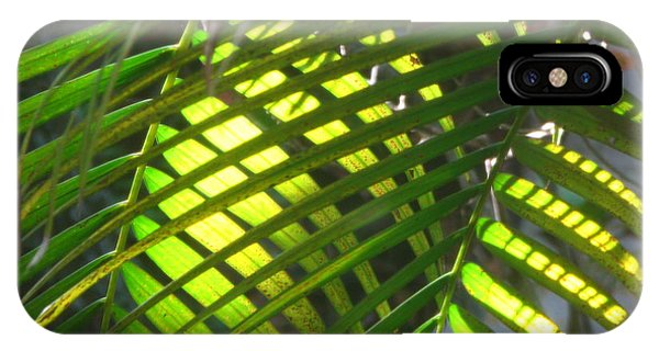Palm Leaves In Sun IPhone Case