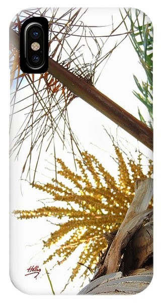 Palm Sky View IPhone Case