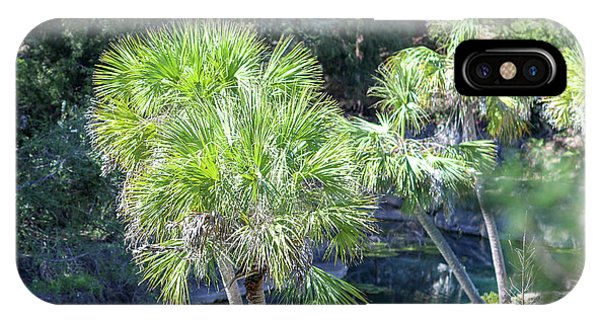 Palm Tree Blue Pond IPhone Case