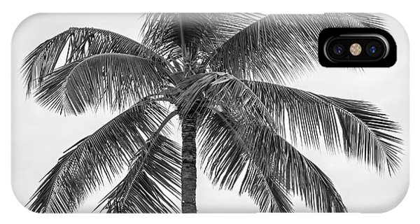 Tree iPhone Case - Palm Tree by Elena Elisseeva