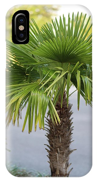 Palm Tree Just There IPhone Case