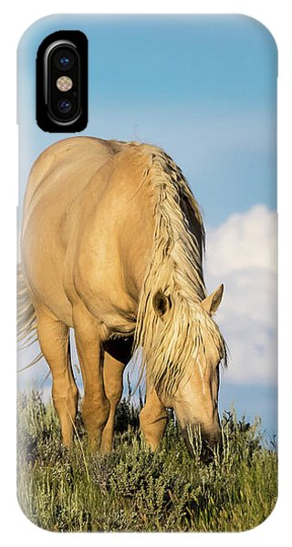 Palomino Wild Stallion In The Evening Light IPhone Case