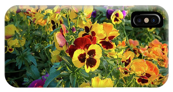 IPhone Case featuring the photograph Pansies by John Brink