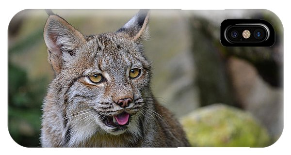 Panting Lynx IPhone Case