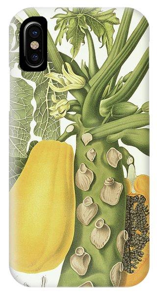 Stamen iPhone Case - Papaya by Berthe Hoola van Nooten