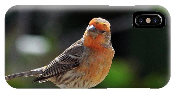 Papaya Bird IPhone Case