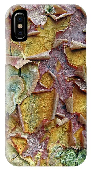Paperbark Maple Tree IPhone Case