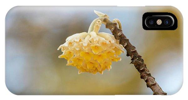 Paperbush Flower IPhone Case