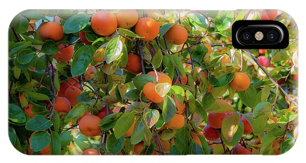 Paradise For Persimmons IPhone Case