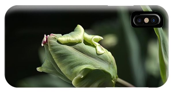 Parrot Tulip Bud IPhone Case