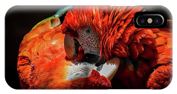 Macaw iPhone Case - Parrots by Mitch Shindelbower