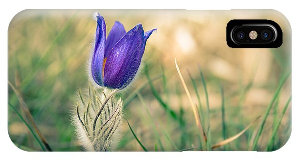 Pasque Flower IPhone Case