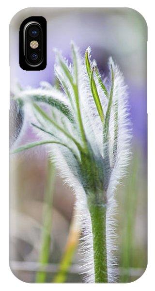 Pasque Flower's Silver Grey Hair IPhone Case