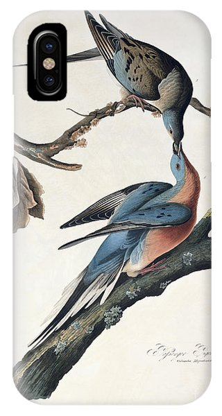 Pigeon iPhone Case - Passenger Pigeon by John James Audubon