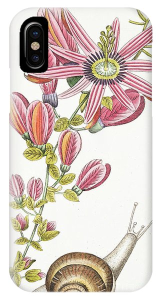Flora iPhone Case - Passiflora Princeps by Antonio Piccioli