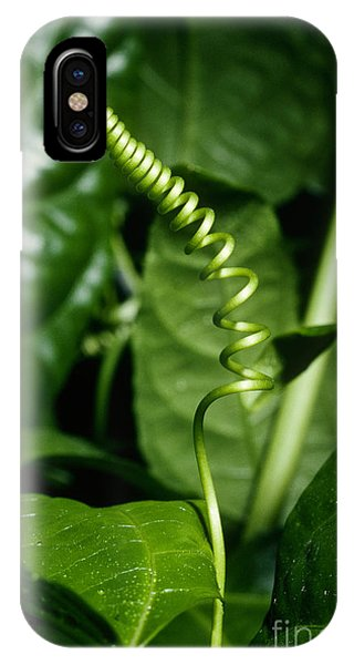 Passionflower Tendrils IPhone Case