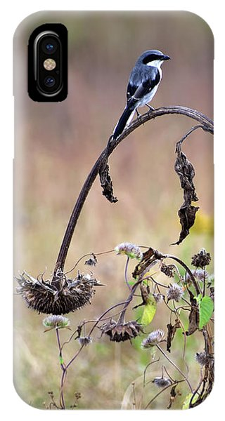Pastoral Scene Bird On Sunflower IPhone Case