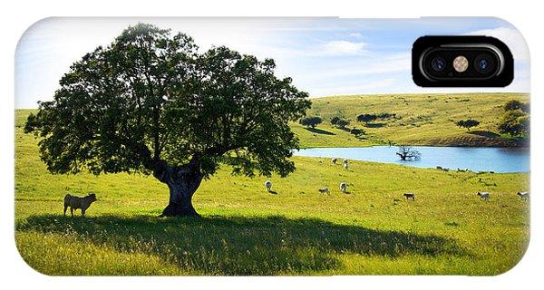 Pasturing Cows IPhone Case