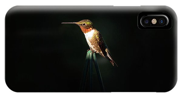 Patch Of Morning Sun IPhone Case