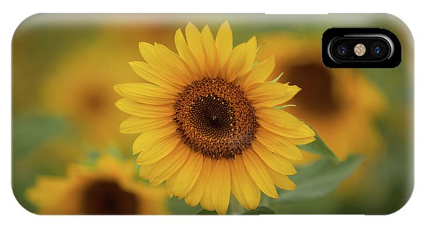 Patch Of Sunflowers IPhone Case