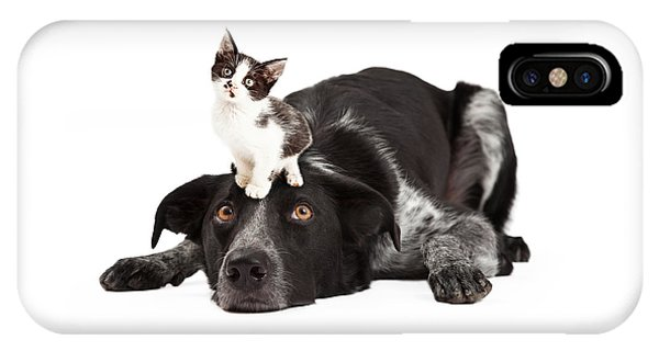 Patient Border Collie With Little Kitten On Head IPhone Case