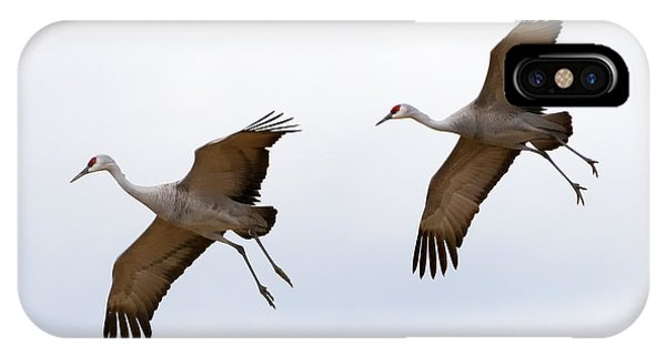 Sandhill Crane iPhone Case - Pattern Of Two by Mike Dawson