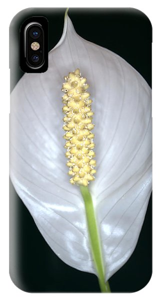 iPhone Case - Peace Lily In Flower. by Chris Day