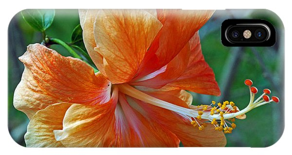 Peachy Hibiscus IPhone Case