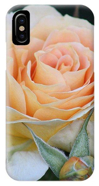 Peach Rose 2 IPhone Case