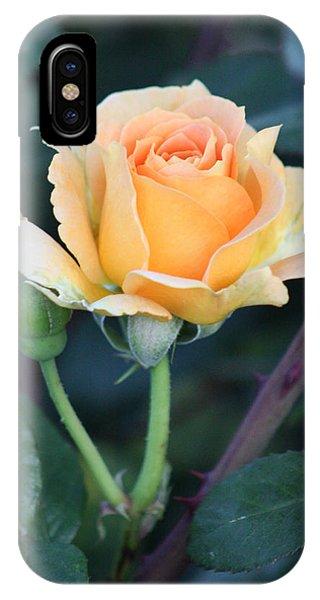 Peach Rose 3 IPhone Case
