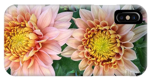 Peachy Chrysanthemums IPhone Case
