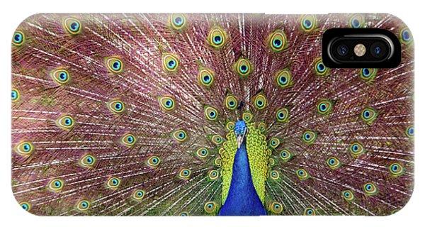 Proud iPhone Case - Peacock by Carlos Caetano