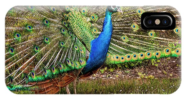 Peacock In Beacon Hill Park IPhone Case