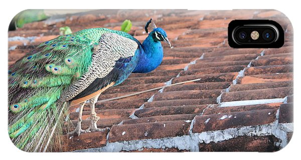 Peacock On Rooftop IPhone Case