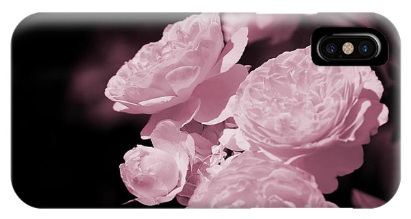 Peacock Pink Cabbage Roses On Black IPhone Case