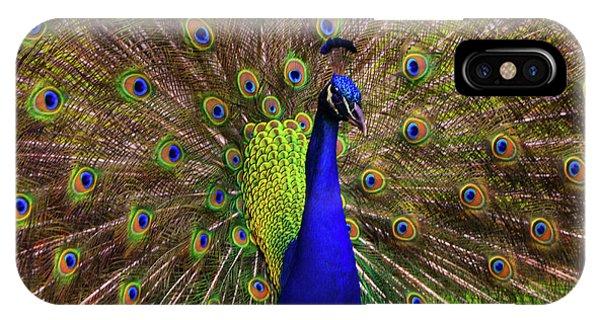 Peacock Showing Breeding Plumage In Jupiter, Florida IPhone Case