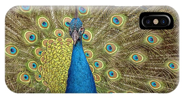 Peacock Splendor IPhone Case