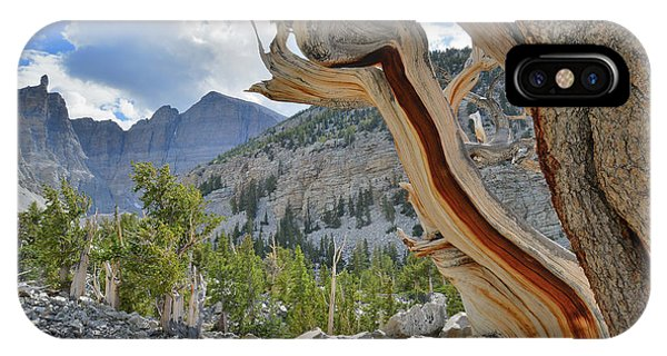 Peak Bristlecone Pine IPhone Case