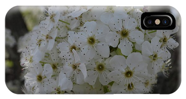 Pear Blossoms IPhone Case