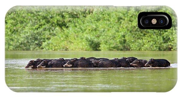 Peccaries Herd Crossing River IPhone Case