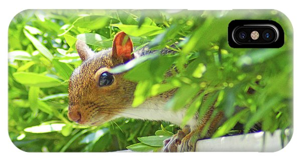 Peek-a-boo Gray Squirrel IPhone Case