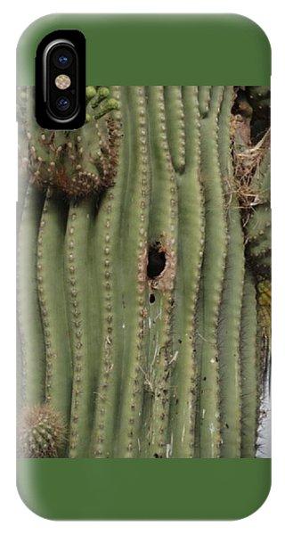 Peek-a-boo Cactus Wren IPhone Case