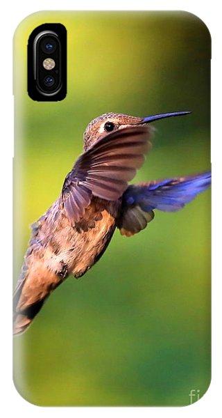 Beautiful Hummingbird iPhone Case - Peek-a-boo Hummingbird by Carol Groenen