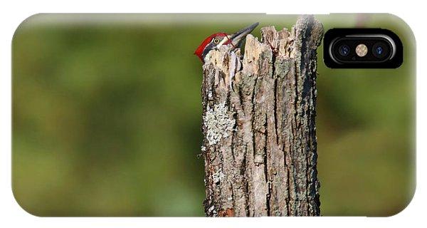 Peek A Boo Pileated Woodpecker IPhone Case